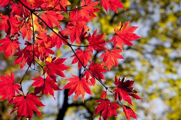 autumn_leaves_quiz_1
