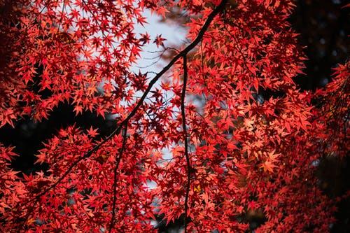 autumn_leaves_quiz_4