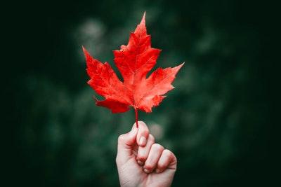 autumn_leaves_quiz_2